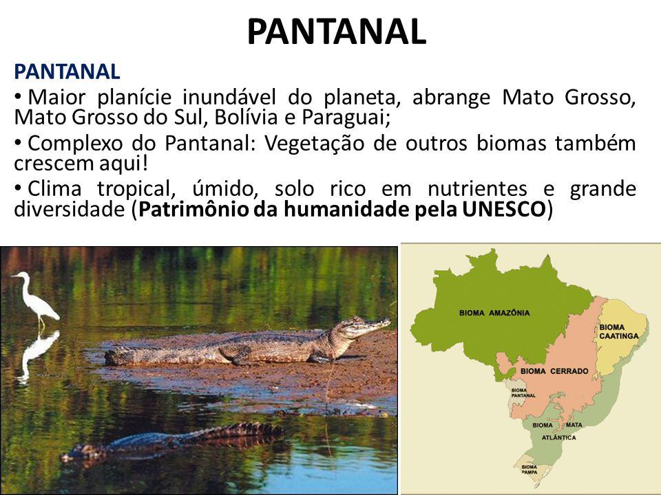 PANTANAL Maior planície inundável do planeta, abrange Mato Grosso, Mato Grosso do Sul, Bolívia e Paraguai; Complexo do Pantanal: Vegetação de outros b
