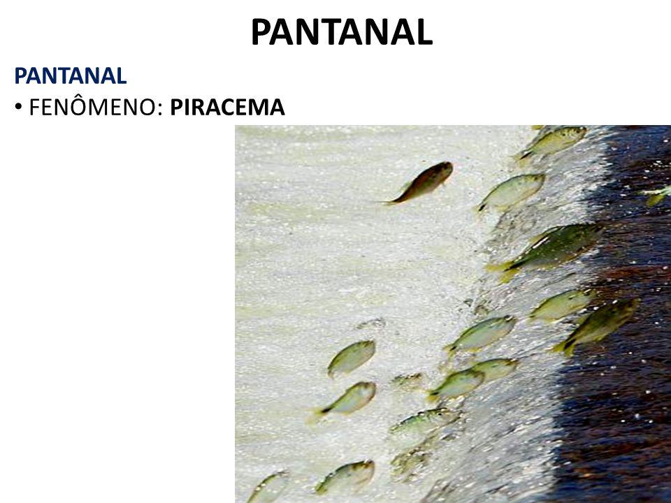 PANTANAL FENÔMENO: PIRACEMA