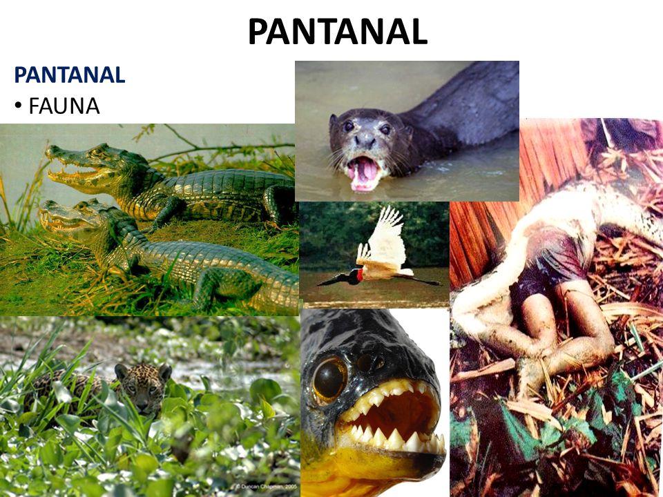 PANTANAL FAUNA