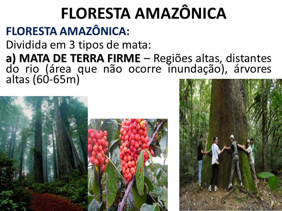FLORESTA AMAZÔNICA FLORESTA AMAZÔNICA: Dividida em 3 tipos de mata: a) MATA DE TERRA FIRME a) MATA DE TERRA FIRME – Regiões altas, distantes do rio (á