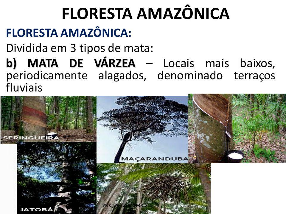 FLORESTA AMAZÔNICA FLORESTA AMAZÔNICA: Dividida em 3 tipos de mata: b) MATA DE VÁRZEA b) MATA DE VÁRZEA – Locais mais baixos, periodicamente alagados,