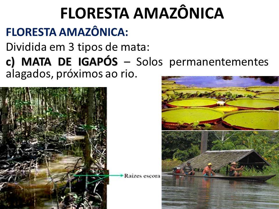 FLORESTA AMAZÔNICA FLORESTA AMAZÔNICA: Dividida em 3 tipos de mata: c) MATA DE IGAPÓS c) MATA DE IGAPÓS – Solos permanentementes alagados, próximos ao