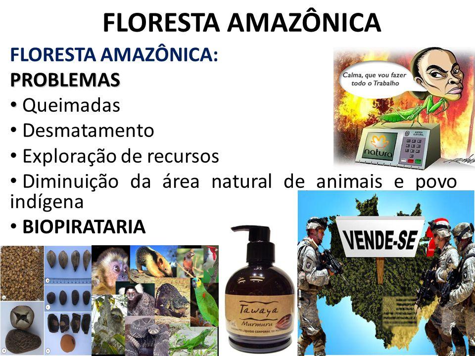 FLORESTA AMAZÔNICA FLORESTA AMAZÔNICA:PROBLEMAS Queimadas Desmatamento Exploração de recursos Diminuição da área natural de animais e povo indígena BI