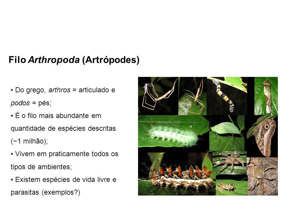 Filo Arthropoda (Artrópodes) Do grego, arthros = articulado e podos = pés; É o filo mais abundante em quantidade de espécies descritas (~1 milhão); Vi