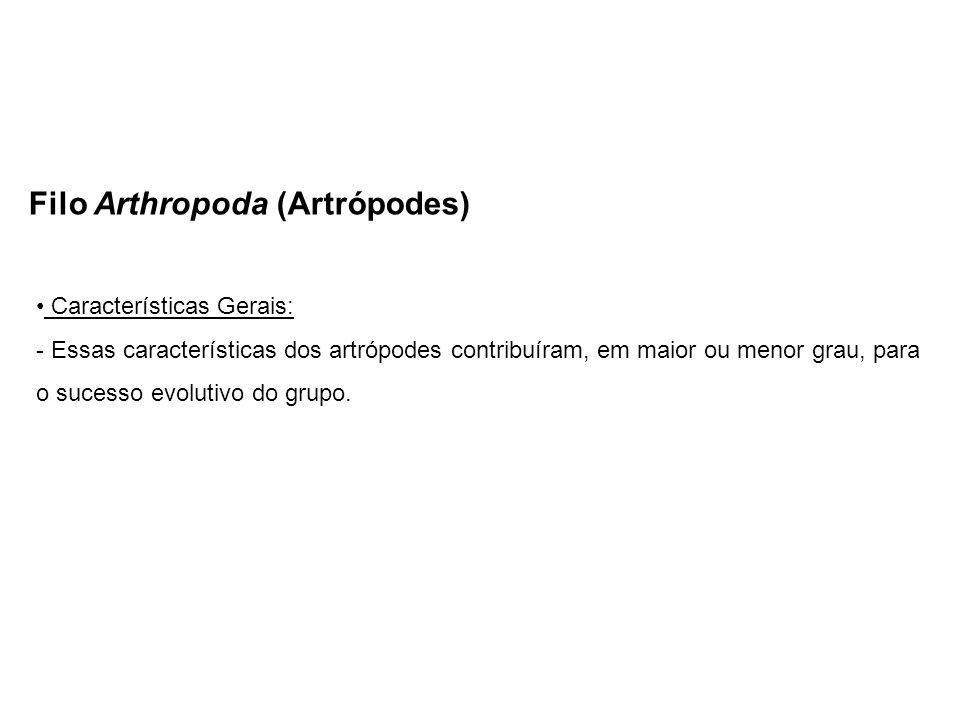 Filo Arthropoda (Artrópodes) Características Gerais: - Essas características dos artrópodes contribuíram, em maior ou menor grau, para o sucesso evolu