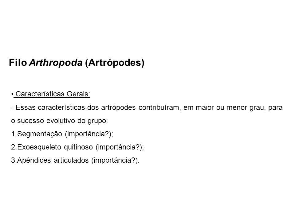 Filo Arthropoda (Artrópodes) Características Gerais: - Essas características dos artrópodes contribuíram, em maior ou menor grau, para o sucesso evolutivo do grupo: 1.Segmentação (importância?); 2.Exoesqueleto quitinoso (importância?); 3.Apêndices articulados (importância?).