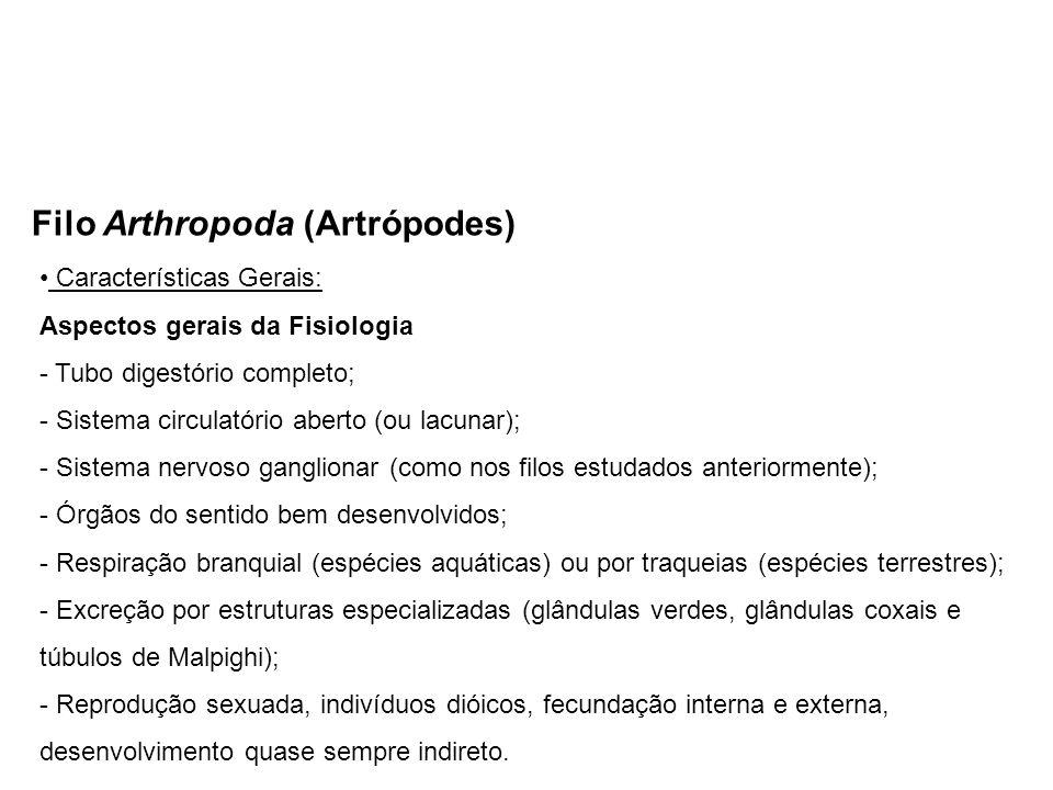 Filo Arthropoda (Artrópodes) Características Gerais: Aspectos gerais da Fisiologia - Tubo digestório completo; - Sistema circulatório aberto (ou lacunar); - Sistema nervoso ganglionar (como nos filos estudados anteriormente); - Órgãos do sentido bem desenvolvidos; - Respiração branquial (espécies aquáticas) ou por traqueias (espécies terrestres); - Excreção por estruturas especializadas (glândulas verdes, glândulas coxais e túbulos de Malpighi); - Reprodução sexuada, indivíduos dióicos, fecundação interna e externa, desenvolvimento quase sempre indireto.