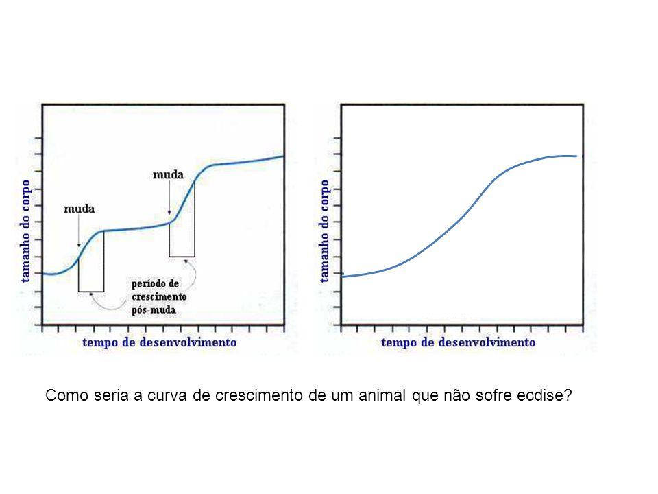 Como seria a curva de crescimento de um animal que não sofre ecdise?