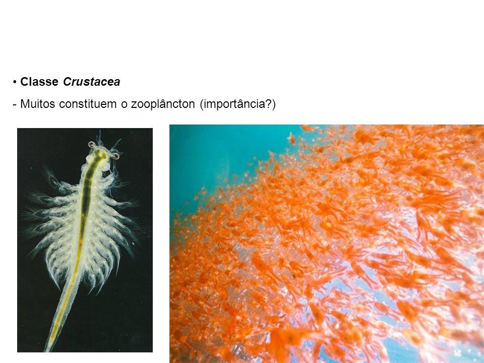 Classe Crustacea - Muitos constituem o zooplâncton (importância?)