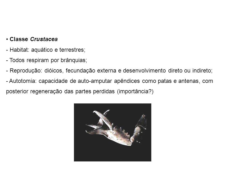 Classe Crustacea - Habitat: aquático e terrestres; - Todos respiram por brânquias; - Reprodução: dióicos, fecundação externa e desenvolvimento direto ou indireto; - Autotomia: capacidade de auto-amputar apêndices como patas e antenas, com posterior regeneração das partes perdidas (importância?)