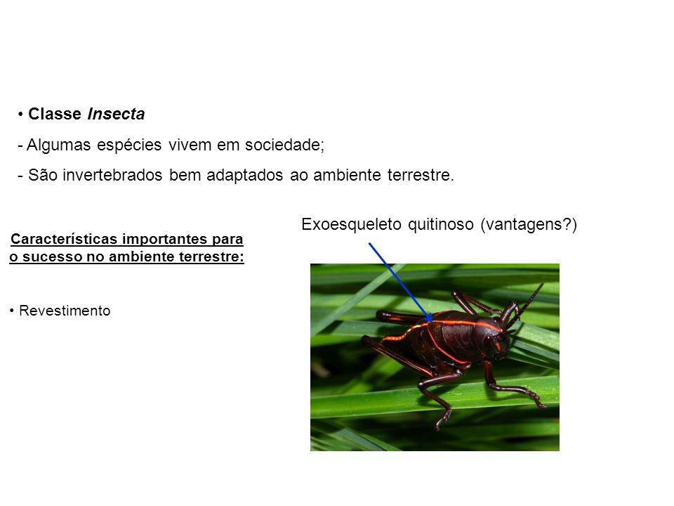 Exoesqueleto quitinoso (vantagens?) Classe Insecta - Algumas espécies vivem em sociedade; - São invertebrados bem adaptados ao ambiente terrestre.