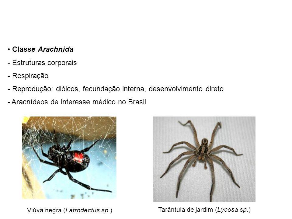 Classe Arachnida - Estruturas corporais - Respiração - Reprodução: dióicos, fecundação interna, desenvolvimento direto - Aracnídeos de interesse médic