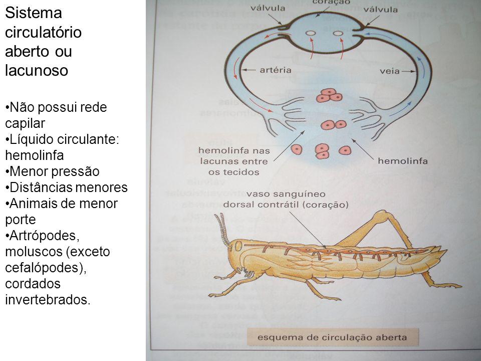 Sistema circulatório aberto ou lacunoso Não possui rede capilar Líquido circulante: hemolinfa Menor pressão Distâncias menores Animais de menor porte