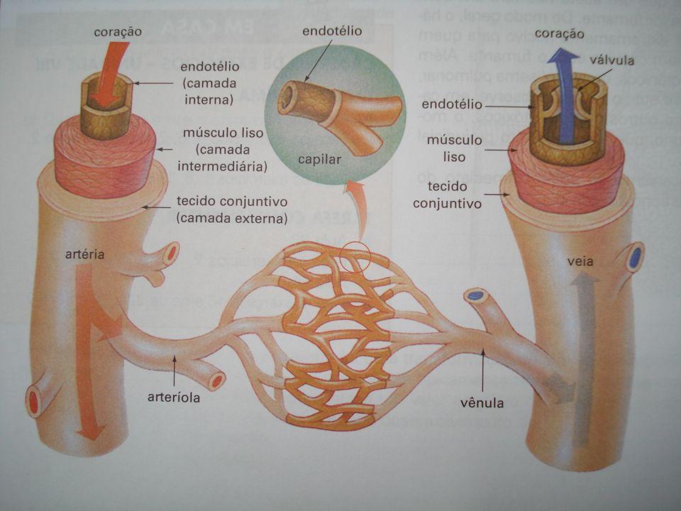 Vasos sanguíneos Artérias: saem do coração, paredes mais espessas, diâmetro maior.