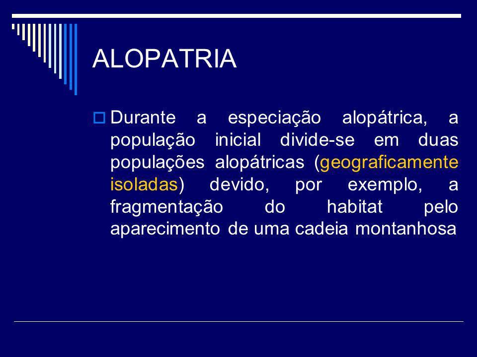 ALOPATRIA Durante a especiação alopátrica, a população inicial divide-se em duas populações alopátricas (geograficamente isoladas) devido, por exemplo