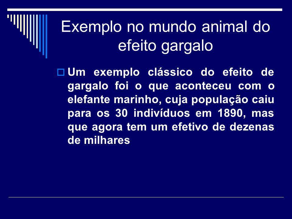 Exemplo no mundo animal do efeito gargalo Um exemplo clássico do efeito de gargalo foi o que aconteceu com o elefante marinho, cuja população caiu par