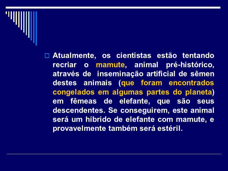 Atualmente, os cientistas estão tentando recriar o mamute, animal pré-histórico, através de inseminação artificial de sêmen destes animais (que foram