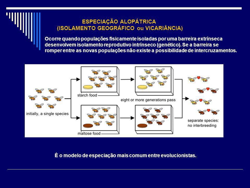 ESPECIAÇÃO ALOPÁTRICA (ISOLAMENTO GEOGRÁFICO ou VICARIÂNCIA) Ocorre quando populações fisicamente isoladas por uma barreira extrínseca desenvolvem iso