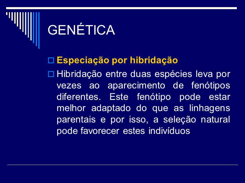 GENÉTICA Especiação por hibridação Hibridação entre duas espécies leva por vezes ao aparecimento de fenótipos diferentes. Este fenótipo pode estar mel