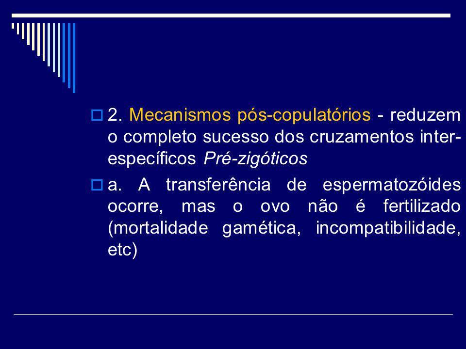 2. Mecanismos pós-copulatórios - reduzem o completo sucesso dos cruzamentos inter- específicos Pré-zigóticos a. A transferência de espermatozóides oco