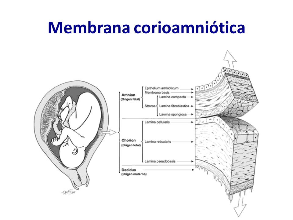Corioamnionite - Patogênese Ascensão bacteriana Romero R, Mazor M.