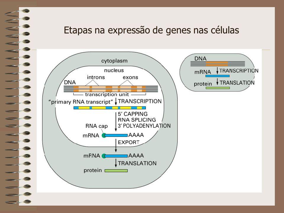 Quantificação de RNA por Real-Time PCR Detecção de fluorescência gerada em cada ciclo de amplificação: - SYBR green - Primers fluorescentes