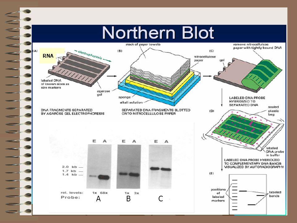 Quantificação de RNA por Real-Time PCR: o método TaqMan