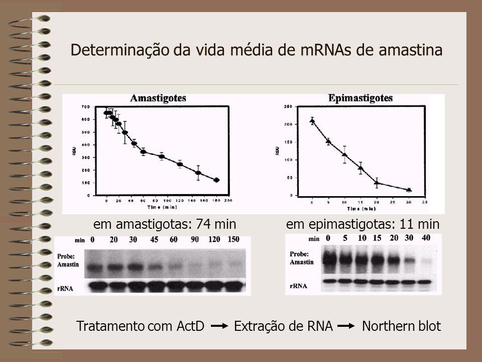Quantificação da expressão de um mRNA - Northern blot - Proteção à RNAse - Primer extension - RT-PCR (?) - Real Time PCR