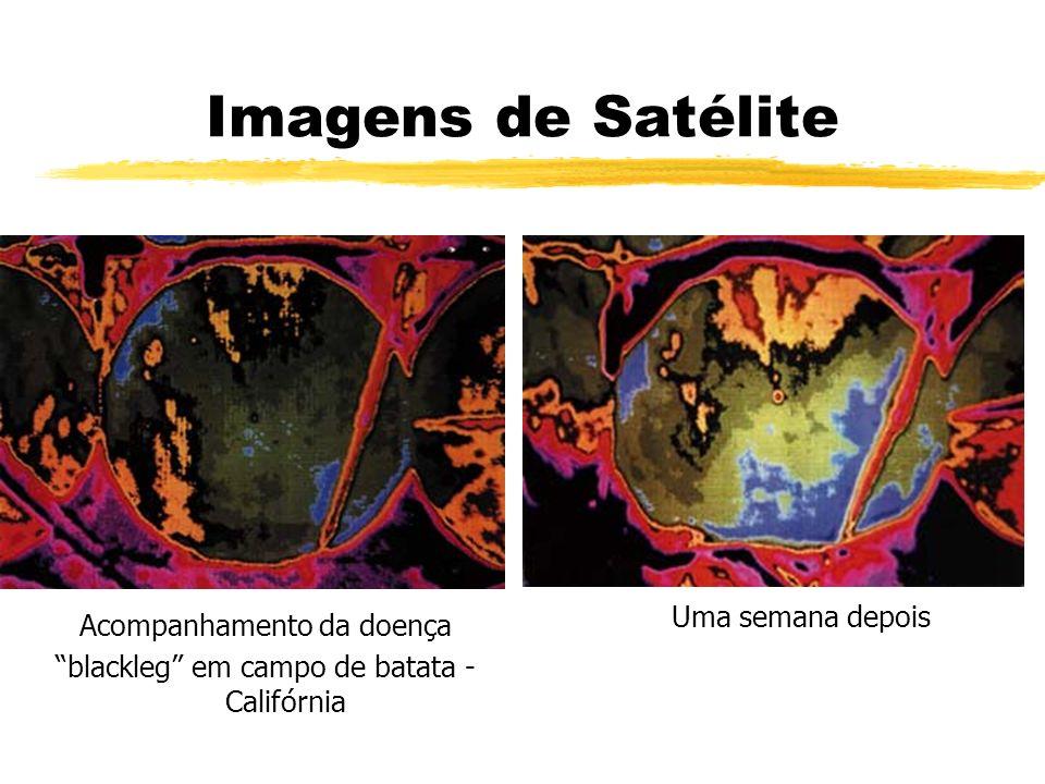 Imagens de Satélite Acompanhamento da doença blackleg em campo de batata - Califórnia Uma semana depois