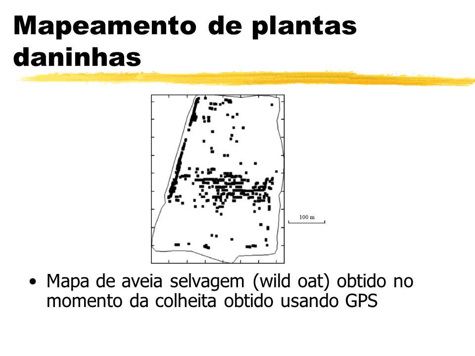 Mapeamento de plantas daninhas Mapa de aveia selvagem (wild oat) obtido no momento da colheita obtido usando GPS