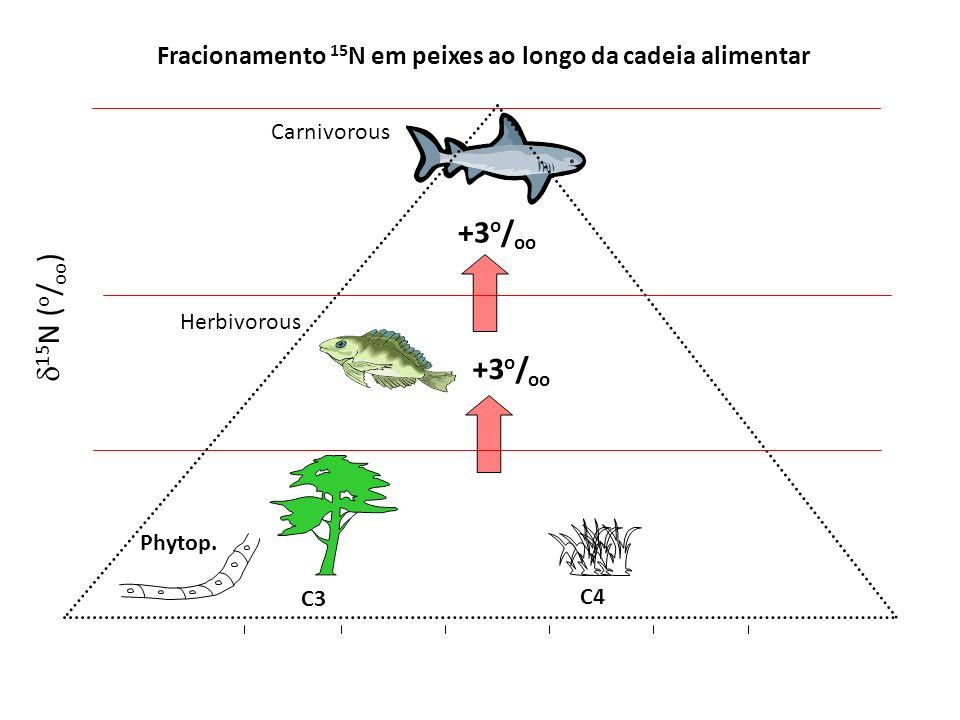 Fracionamento 15 N em peixes ao longo da cadeia alimentar C3 C4 Phytop. Herbivorous Carnivorous +3 o / oo 15 N ( o / oo )