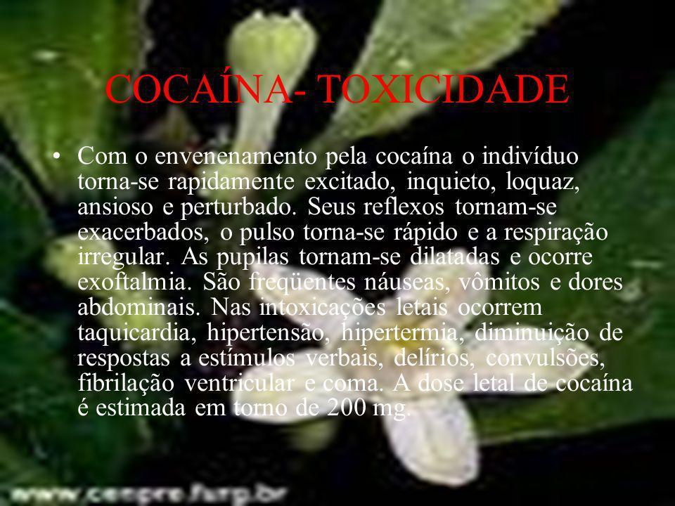 COCAÍNA- TOXICIDADE Com o envenenamento pela cocaína o indivíduo torna-se rapidamente excitado, inquieto, loquaz, ansioso e perturbado. Seus reflexos