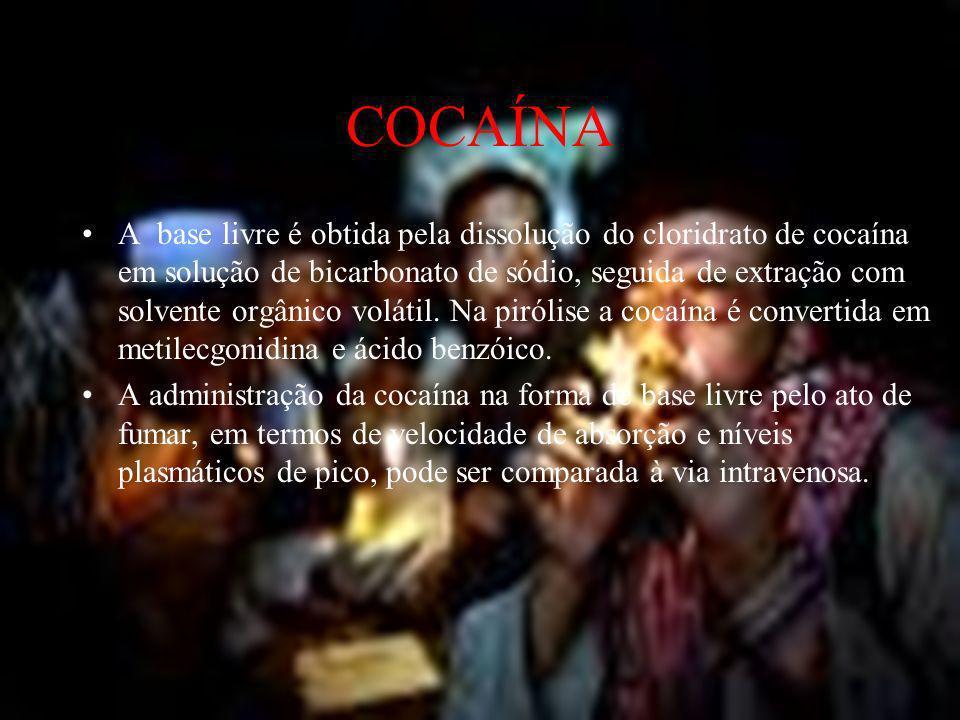 COCAÍNA- TOXICOCINÉTICA Após a absorção a cocaína é facilmente destruída no fígado, embora uma pequena proporção possa ser excretada inalterada na urina.