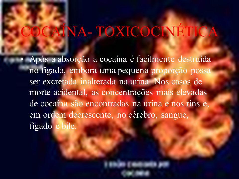 COCAÍNA- TOXICOCINÉTICA Após a absorção a cocaína é facilmente destruída no fígado, embora uma pequena proporção possa ser excretada inalterada na uri