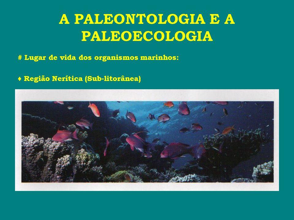 A PALEONTOLOGIA E A PALEOECOLOGIA # Lugar de vida dos organismos marinhos: Região Nerítica (Sub-litorânea)