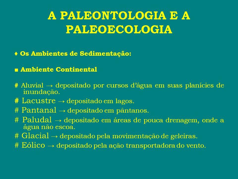 A PALEONTOLOGIA E A PALEOECOLOGIA Os Ambientes de Sedimentação: Ambiente Continental # Aluvial depositado por cursos dágua em suas planícies de inunda