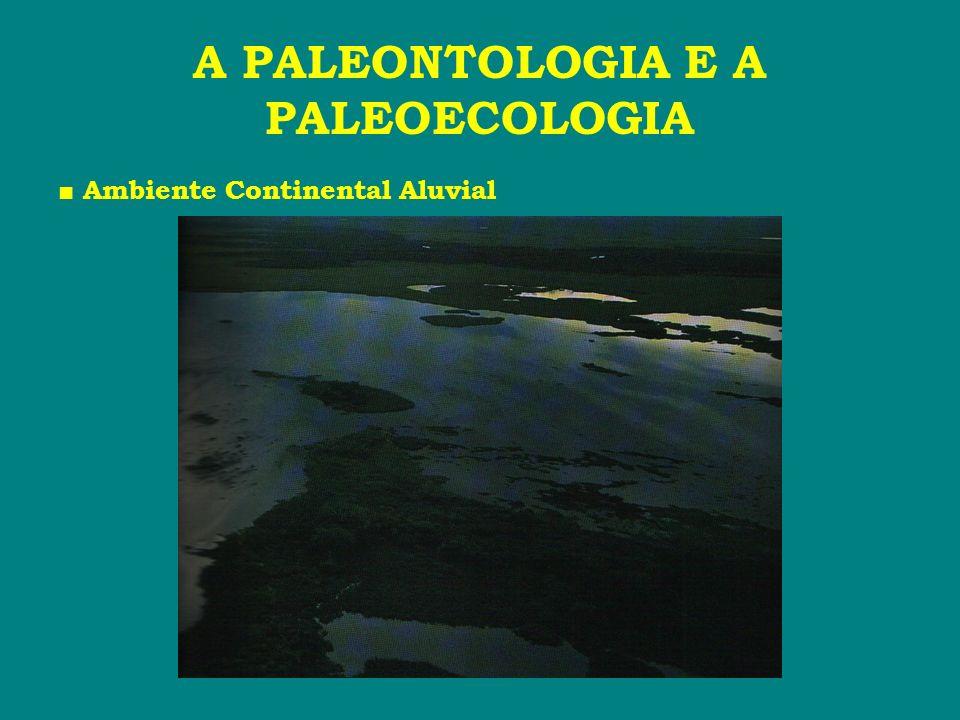 A PALEONTOLOGIA E A PALEOECOLOGIA Os Ambientes de Sedimentação: Ambiente Transicional # Deltáico depositado no delta do rio ou na borda do mar.