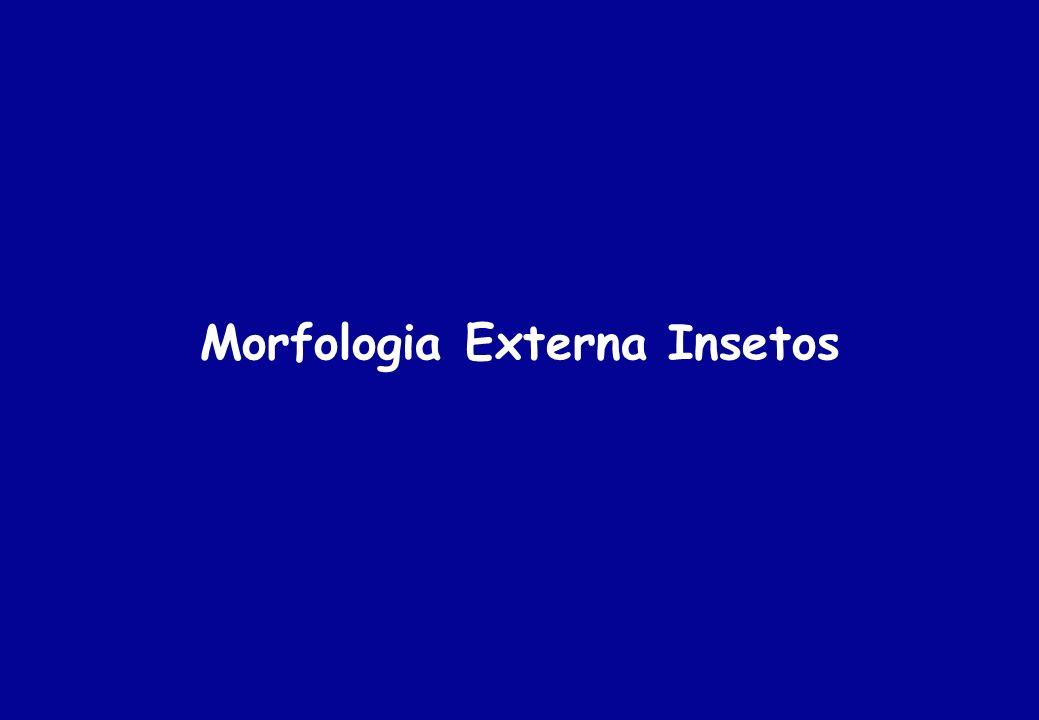 Morfologia Externa Insetos