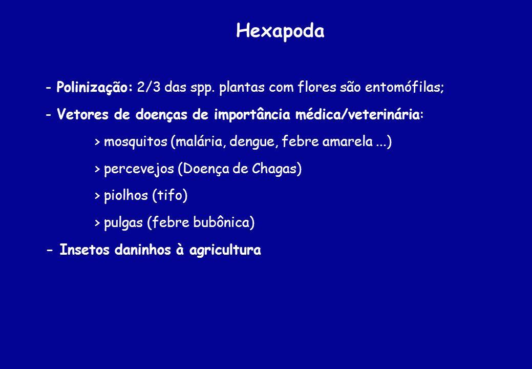 Hexapoda - Polinização: 2/3 das spp. plantas com flores são entomófilas; - Vetores de doenças de importância médica/veterinária: > mosquitos (malária,