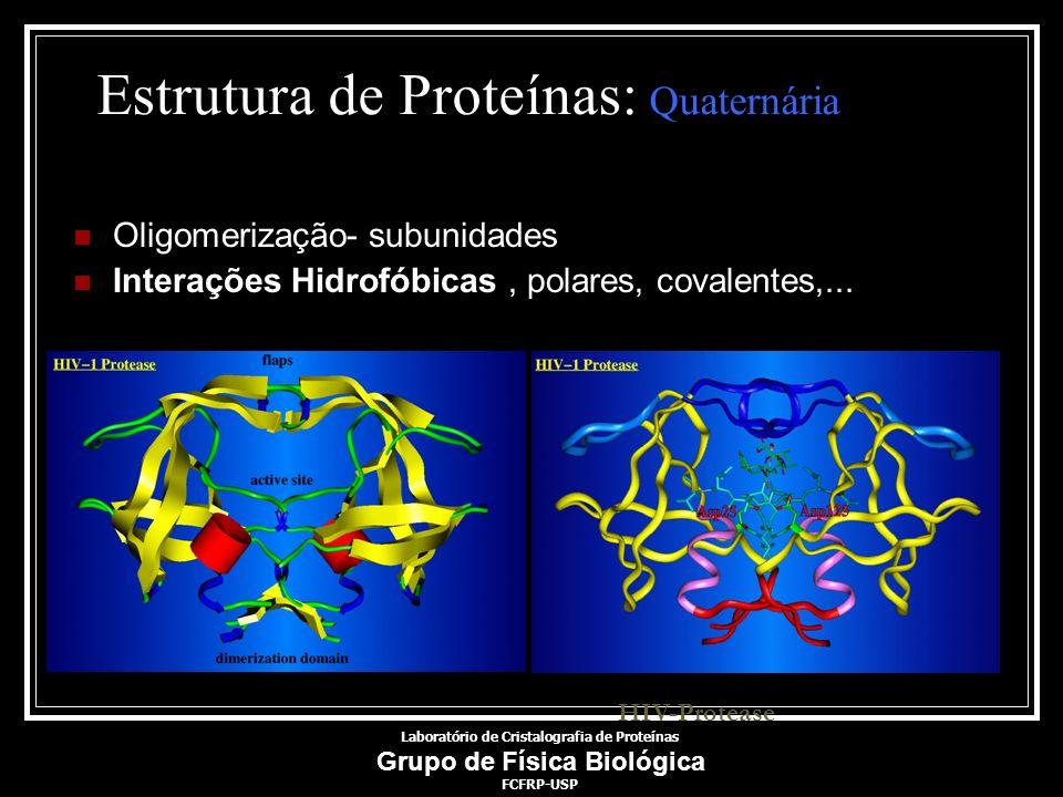 Estrutura de Proteínas: Quaternária Oligomerização- subunidades Interações Hidrofóbicas, polares, covalentes,... HIV-Protease Laboratório de Cristalog