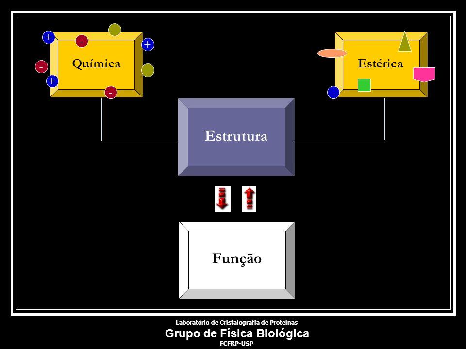 EstéricaQuímica - + - + - + Laboratório de Cristalografia de Proteínas Grupo de Física Biológica FCFRP-USP Estrutura Função