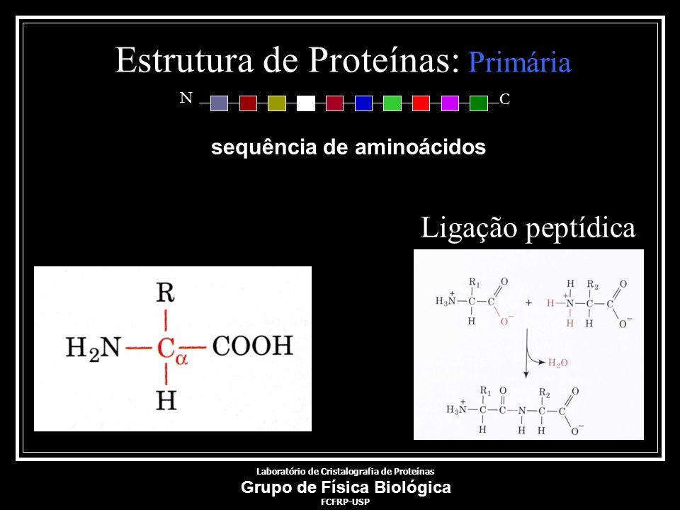 Estrutura de Proteínas: Primária sequência de aminoácidos N C Ligação peptídica Laboratório de Cristalografia de Proteínas Grupo de Física Biológica F