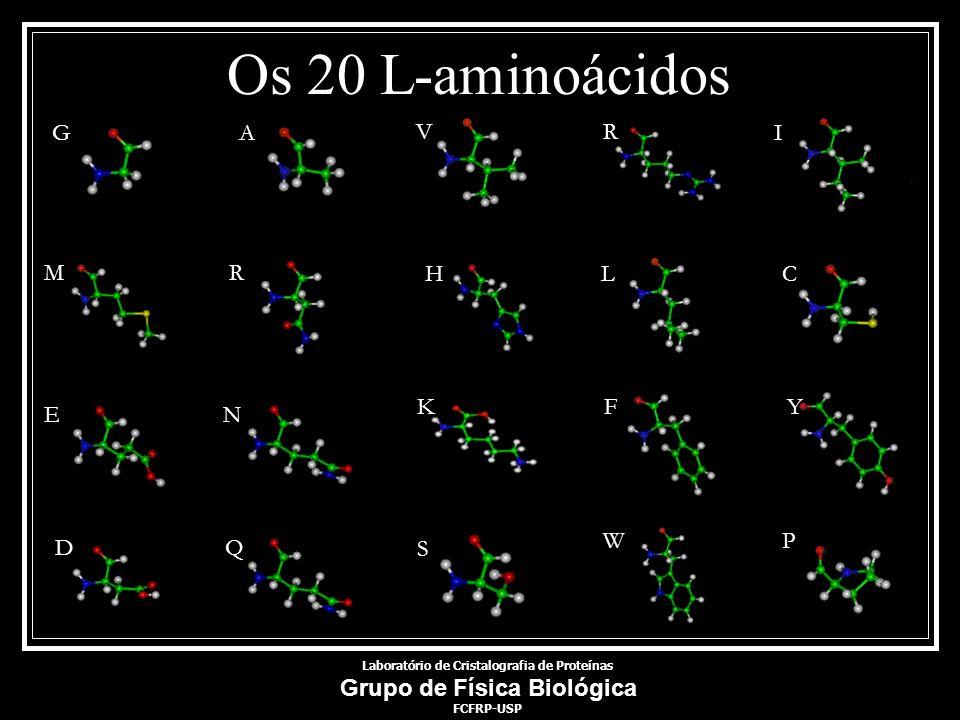 Os 20 L-aminoácidos GA D R I MR HLC E N KF Y Q S WP V Laboratório de Cristalografia de Proteínas Grupo de Física Biológica FCFRP-USP