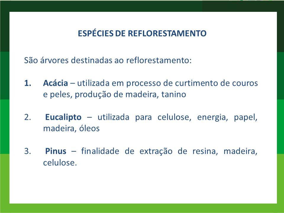 ESPÉCIES DE REFLORESTAMENTO São árvores destinadas ao reflorestamento: 1.Acácia – utilizada em processo de curtimento de couros e peles, produção de m