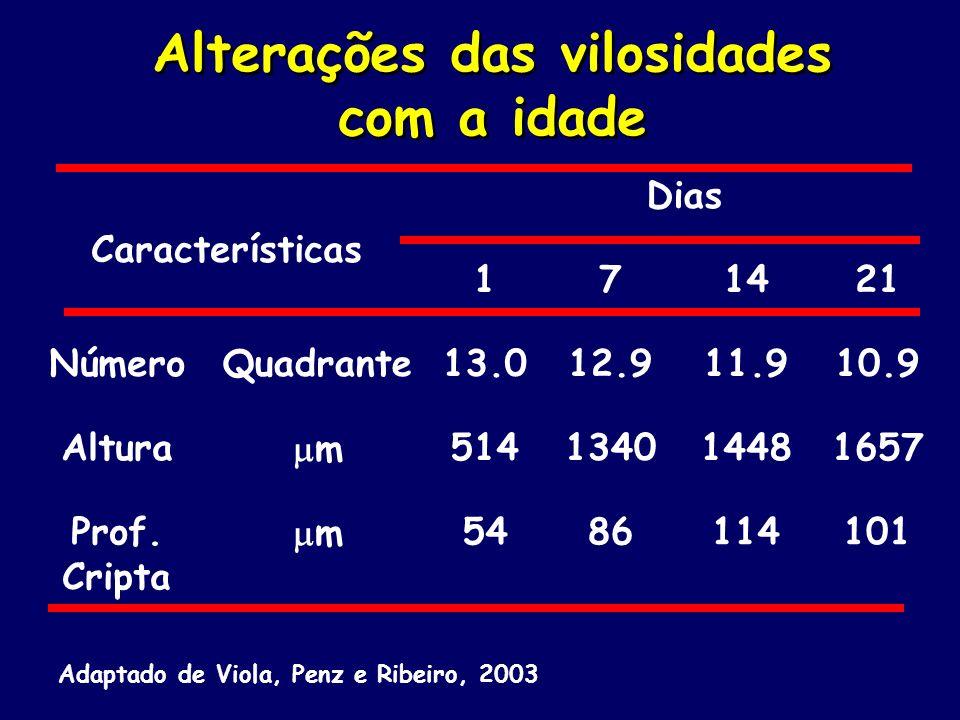 Alterações das vilosidades com a idade Características Dias 171421 NúmeroQuadrante13.012.911.910.9 Altura m514134014481657 Prof. Cripta m5486114101 Ad