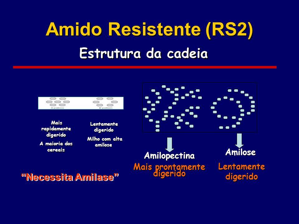 Amido Resistente (RS2) Estrutura da cadeia Amilopectina Mais prontamente digerido Amilopectina Mais prontamente digerido Amilose Lentamente digerido A