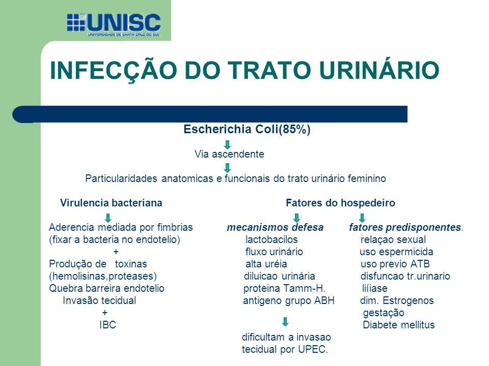 INFECÇÃO DO TRATO URINÁRIO Escherichia Coli(85%) Via ascendente Particularidades anatomicas e funcionais do trato urinário feminino Virulencia bacteri
