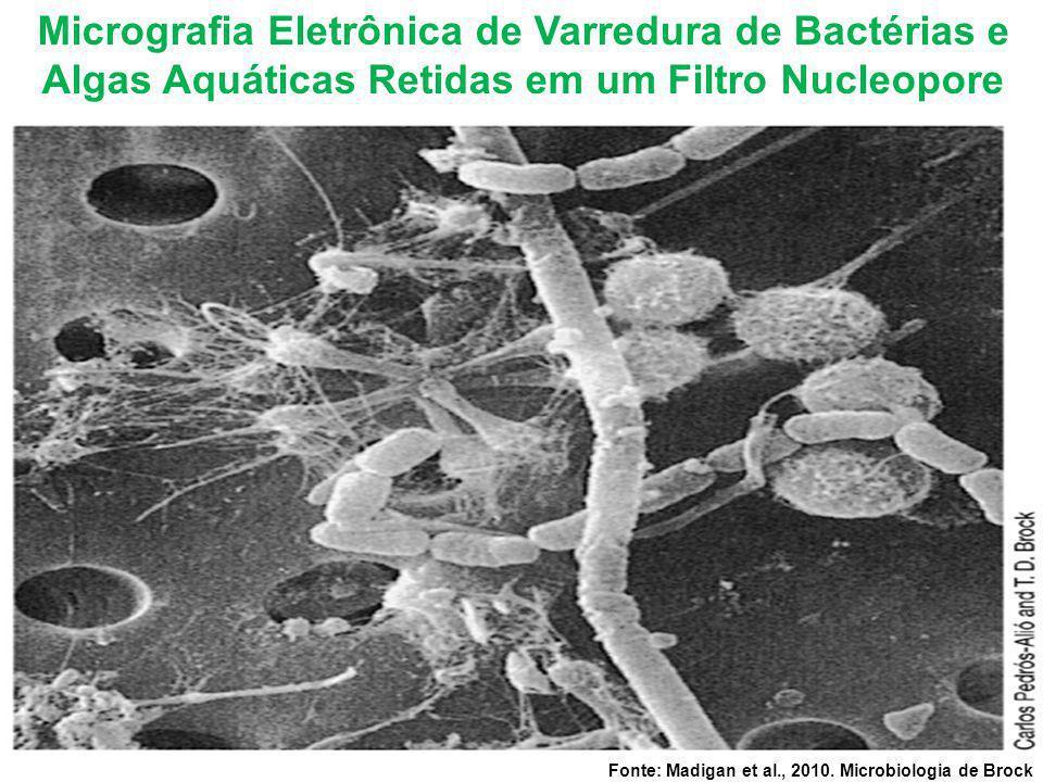 Micrografia Eletrônica de Varredura de Bactérias e Algas Aquáticas Retidas em um Filtro Nucleopore Fonte: Madigan et al., 2010. Microbiologia de Brock
