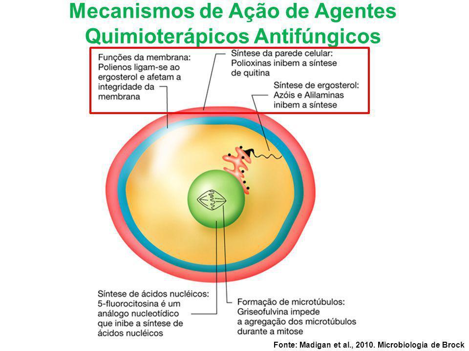 Fonte: Madigan et al., 2010. Microbiologia de Brock Mecanismos de Ação de Agentes Quimioterápicos Antifúngicos