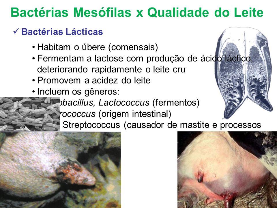 Bactérias Mesófilas x Qualidade do Leite Bactérias Lácticas Habitam o úbere (comensais) Fermentam a lactose com produção de ácido láctico, deteriorand